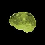 brain-lrg-300x231-2 copia